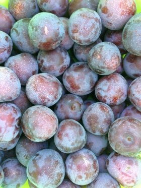 plums from suzanne