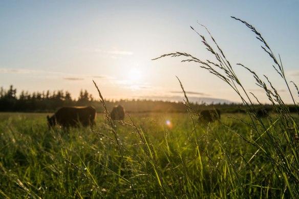 Sweet-Grass_34