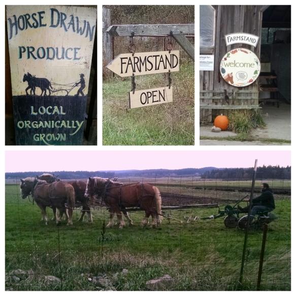468 horse-drawn-farm