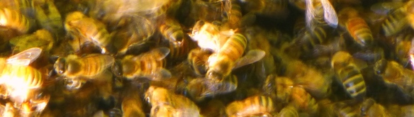 rotated bees